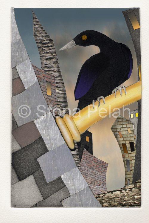 blackbird-sfona-pelah