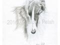 borzoi-russian-wolfhound-portrait-by-sfona-pelah