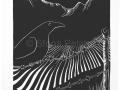 raven-on-fence-sfona pelah